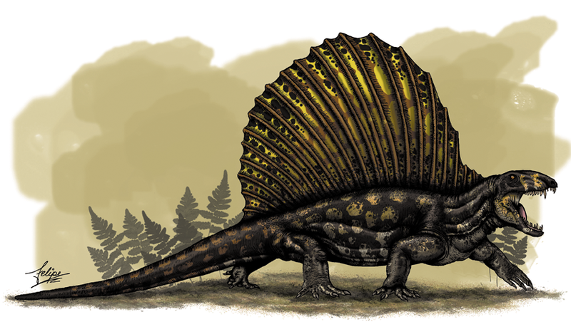 Dimetrodon, about 275 million years ago.